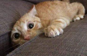 Il tuo gatto l'ha fatta sul divano anche se lo hai educato come ti hanno insegnato? Ecco come sistemare tutto in 6 ore e mezza senza cambiare i programmi della tua giornata.